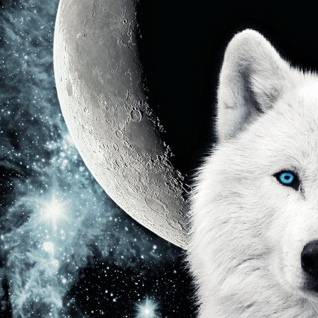 Throw me to the wolves and I'll come back leading the pack. That's one of the messages from the January Wolf Moon and lunar eclipse tonight. Time to dream big and stay soft and receptive... sensing the forces working behind the scenes. More to be revealed as they say......#fullmoon #wolfmoon #wolf #howlingatthemoon #howling #dreamcatcher #dream #lunareclipse #goodnight #yogalife #yogini #forces #dreambig #now #tonight #yogalifestyle #nightsky #moon #fullmåne
