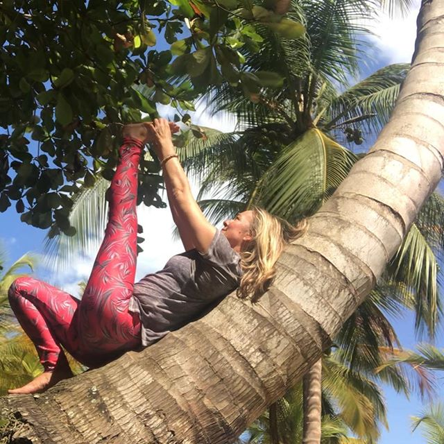 Ever since a child I've loved climbing and hanging out in trees. On the Yoga Journey in Colombia I found some reclining palm trees that felt just like hammocks, but were even more replenishing as they were just perfectly solid and yielding at the same time. Nature is the greatest yoga teacher....@root_to_rise_official #yogajourneyswithulrika #yogaretreat #yogateacher #yogajourney #retreat #meditation #colombia #palmtrees #yogagram #yogalife #yogalover #yogaeverywhere #yogalove #instayoga #yogadaily #yogaoutside #trees #lovinglife #yogini #yogalife #yogalifestyle #yogafam #yogachallenge #yogafun #yogapractice #yoga