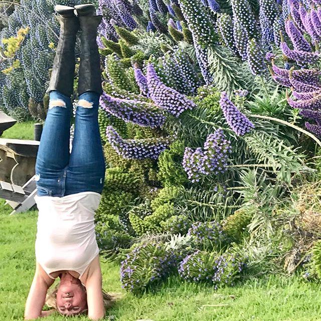 Headstand among abundant Pride of Madera @esalen... Big Sur has a way of turning the world upside down. .....#yogajourneyswithulrika #yogalife #yogafun #headstand #esalen #bigsur #yogini #yogisofinstagram #yogateacher #yogaeverywhere #yogaeveryday #yogateacher #yogalifestyle #yogajourney #yogaretreat #yogatime #yogatravel #yogaretreat #yogaforlife #yogaforever #yogaforeveryone #yogalover #yogalove #instayoga #yogi #yogapose #yogapractice #yogaphotography #yoga