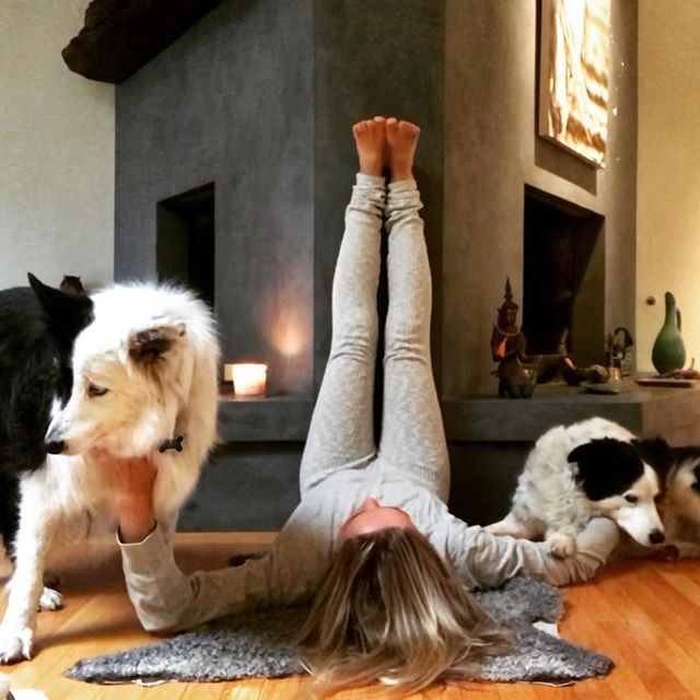 """Saturday morning """"still in PJs Yoga mood"""" with Rose and Zoe. Yesterday it was yoga with my cats, this chilly morning it's with the dogs. Where's my darling teenager?? Not here with Yoga Mama that's for sure:)) Thank goodness for pets!....#yogajourneyswithulrika #yogalife #mood #goodmorning #yogalover  #doglover #yogalove #yogainspiration #yogisofinstagram #instayoga #yogafun #doglove #yogini #yogagirl #yogateacher #yogaeverywhere #yogaeveryday #yogadaily #yogalifestyle #yogamom #yogamama #yogatime #yogateacher #yogaretreat #yogajourney #yogaforeveryone #yogaforlife #dogsofinstagram #dogstagram"""